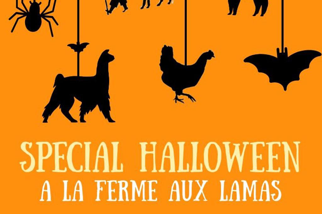 Les lamas fêtent Halloween