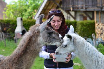Ferme aux lamas - visite VIP